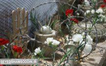 گزارش تصویری / یادواره ۷۲ شهید کلویر ، نویر و قارویر بندرانزلی